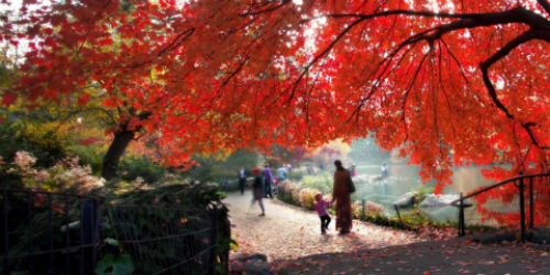 How Walking Will Keep You Healthy this Autumn
